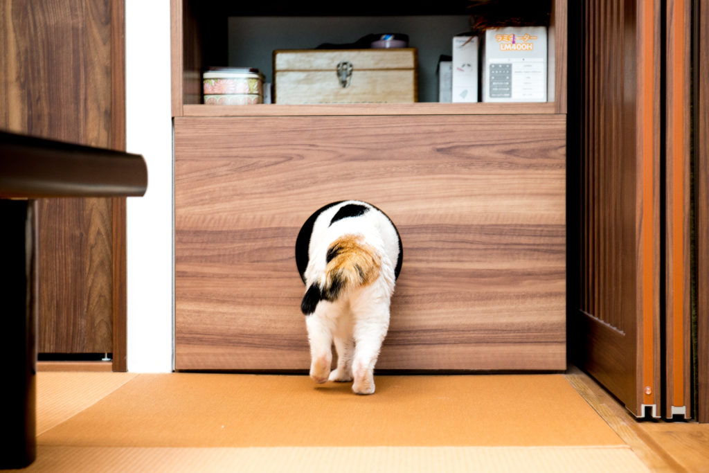 和室を歩く猫