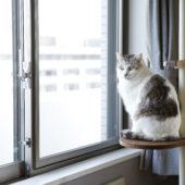 ネコと日向ぼっこ